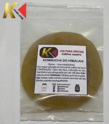 KOMBUCHÁ DO HIMALAIA  (Scoby inteiro - SEM LÍQUIDO)